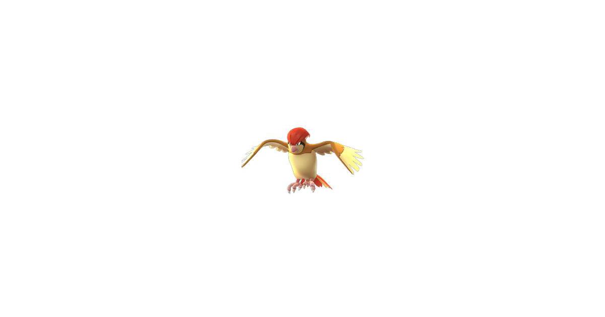 Pokemon Pidgeot Evolution
